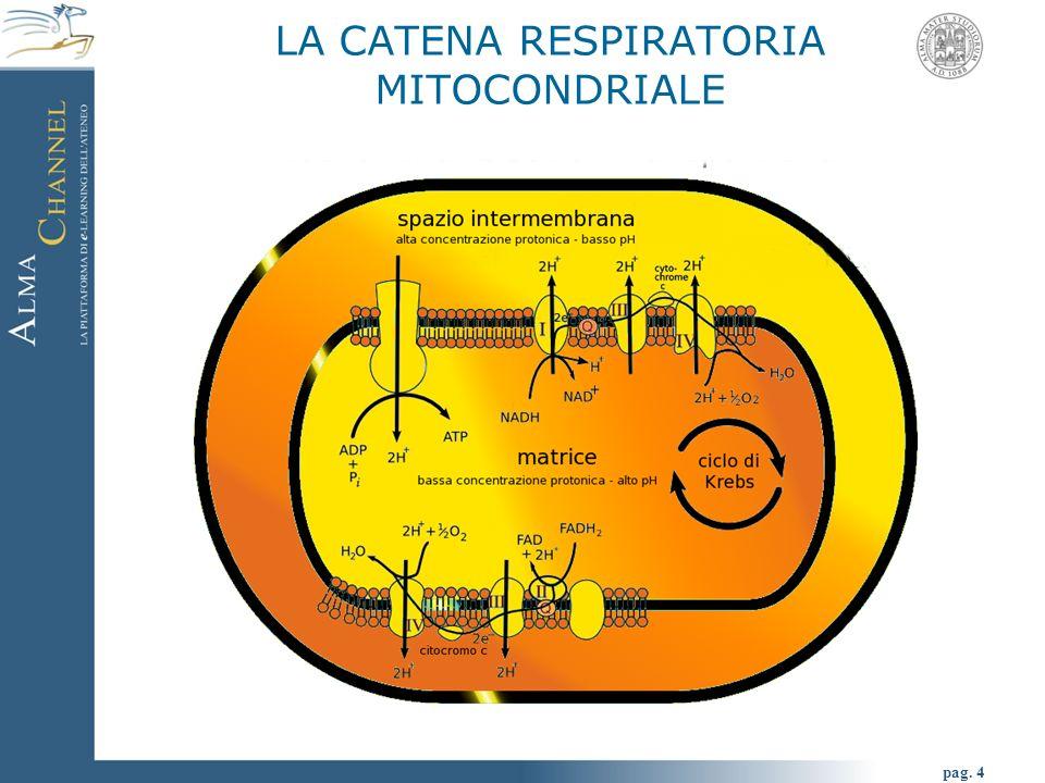 pag. 4 LA CATENA RESPIRATORIA MITOCONDRIALE