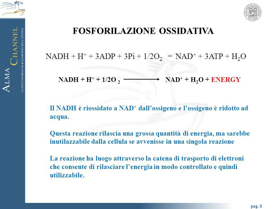 pag. 8 FOSFORILAZIONE OSSIDATIVA NADH + H + + 3ADP + 3Pi + 1/2O 2 = NAD + + 3ATP + H 2 O NADH + H + + 1/2O 2 NAD + + H 2 O + ENERGY Il NADH è riossida