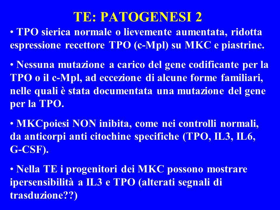 TE: PATOGENESI 2 TPO sierica normale o lievemente aumentata, ridotta espressione recettore TPO (c-Mpl) su MKC e piastrine. Nessuna mutazione a carico