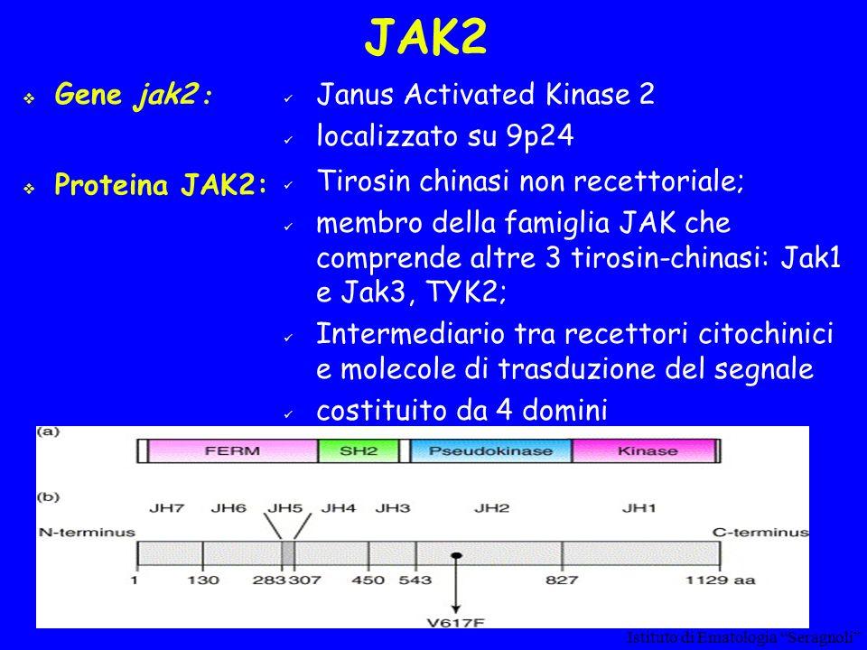 JAK2 Gene jak2 : Proteina JAK2: Janus Activated Kinase 2 localizzato su 9p24 Tirosin chinasi non recettoriale; membro della famiglia JAK che comprende