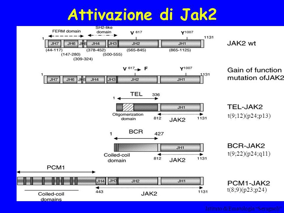 Attivazione di Jak2 Istituto di Ematologia Seragnoli t(8;9)(p23;p24) t(9;12)(p24;p13) t(9;22)(p24;q11)