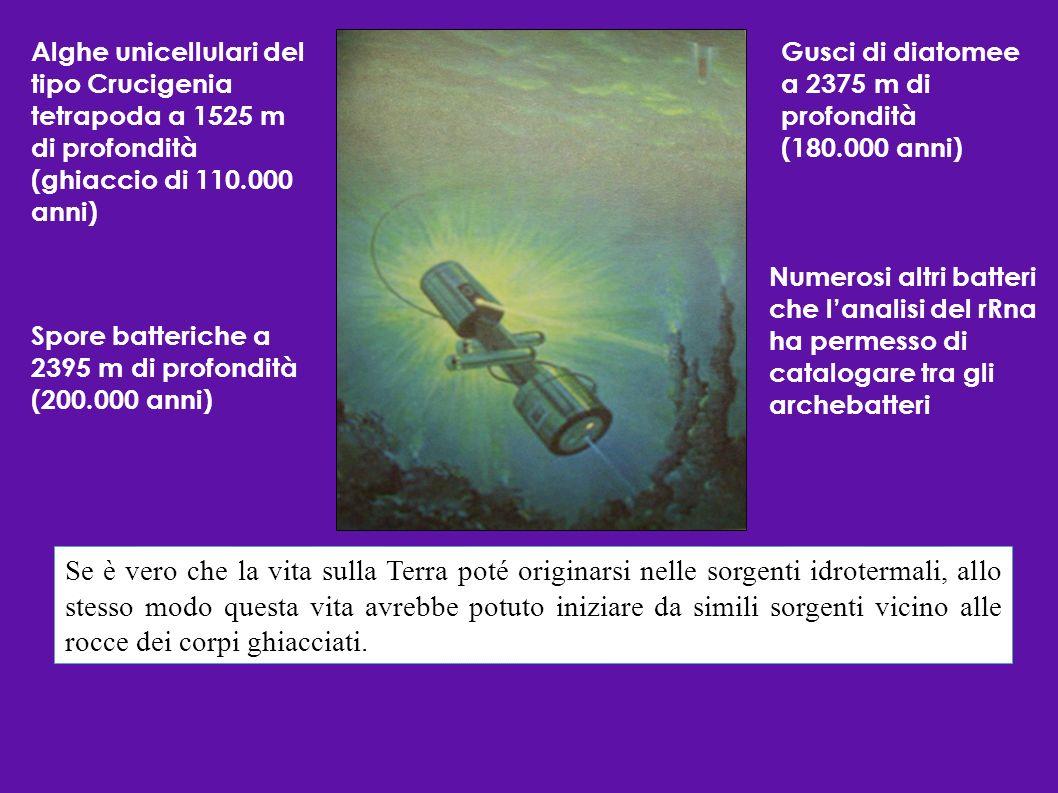 Alghe unicellulari del tipo Crucigenia tetrapoda a 1525 m di profondità (ghiaccio di 110.000 anni) Gusci di diatomee a 2375 m di profondità (180.000 a