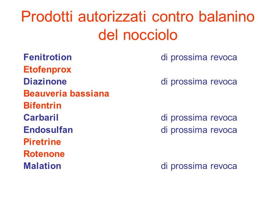 Prodotti autorizzati contro balanino del nocciolo Fenitrotiondi prossima revoca Etofenprox Diazinonedi prossima revoca Beauveria bassiana Bifentrin Ca