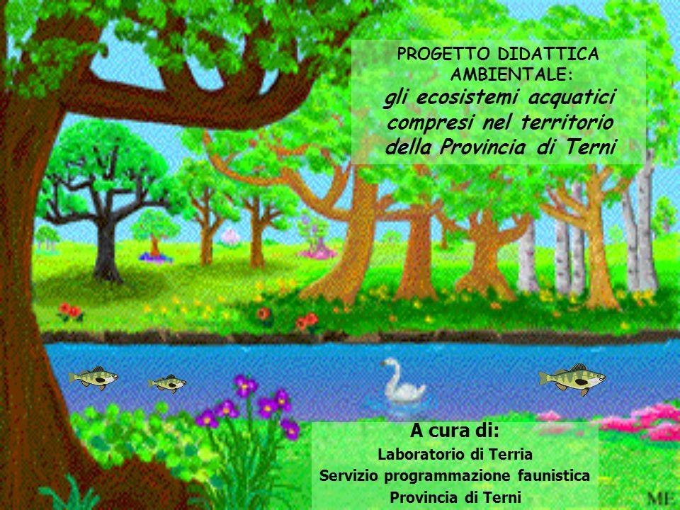 PROGETTO DIDATTICA AMBIENTALE: gli ecosistemi acquatici compresi nel territorio della Provincia di Terni A cura di: Laboratorio di Terria Servizio pro
