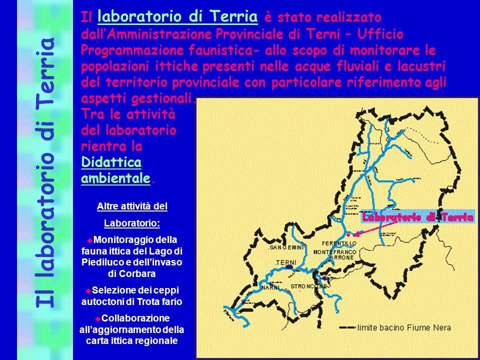 Il laboratorio di Terria Altre attività del Laboratorio: u Monitoraggio della fauna ittica del Lago di Piediluco e dellinvaso di Corbara u Selezione d