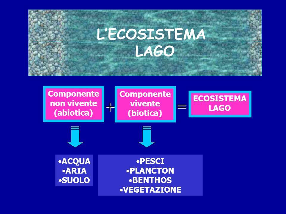 LECOSISTEMA LAGO Componente non vivente (abiotica) ACQUA ARIA SUOLO ECOSISTEMA LAGO + Componente vivente (biotica) = PESCI PLANCTON BENTHOS VEGETAZION