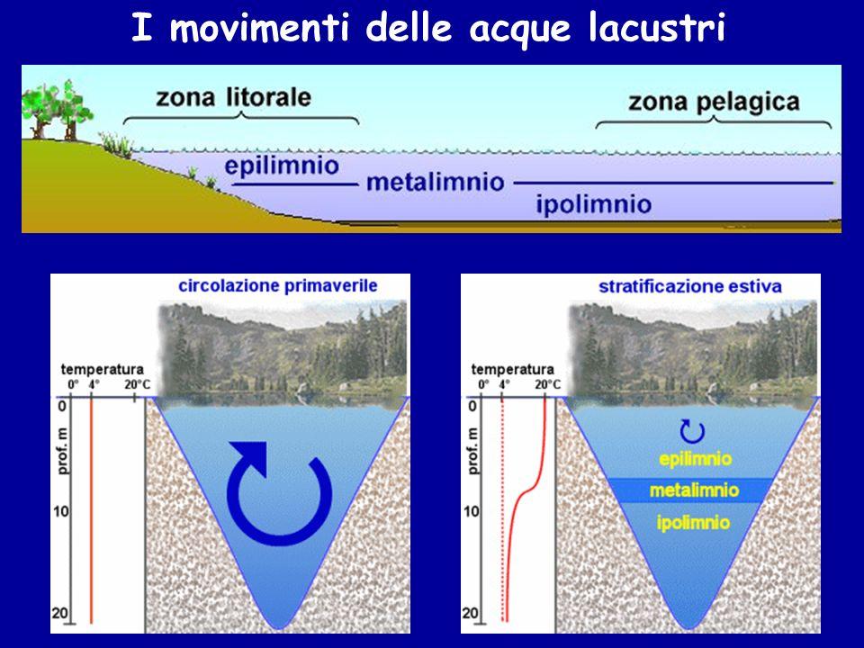 Le piante acquatiche Le macrofite emerse (Tipha) Le macrofite galleggianti (Nimphaea)