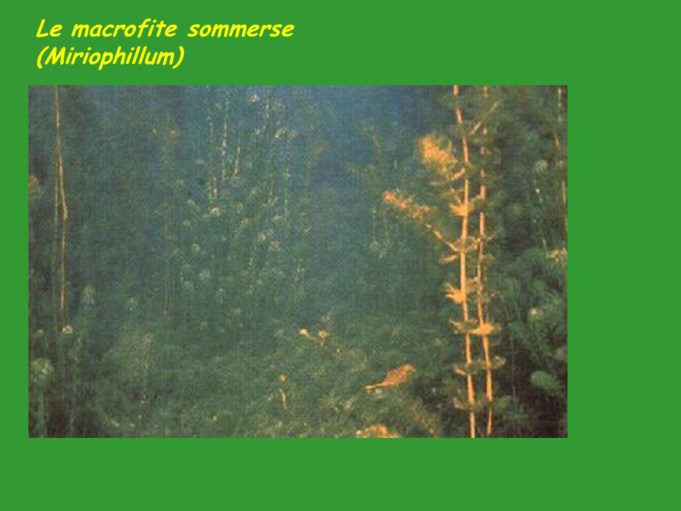 Negli ecosistemi acquatici, gli organismi presenti in maggior quantità sono quelli più piccoli.