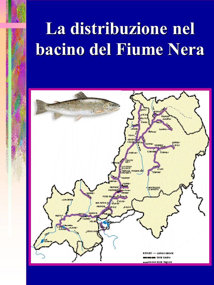 La distribuzione nel bacino del Fiume Nera