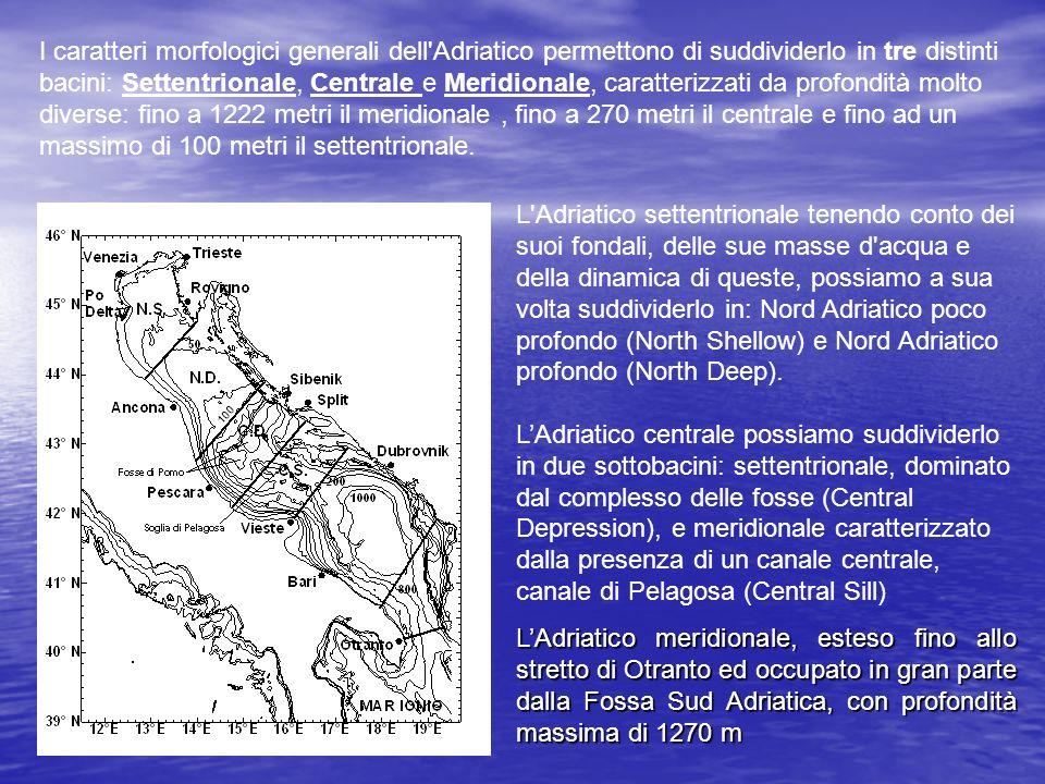 I caratteri morfologici generali dell'Adriatico permettono di suddividerlo in tre distinti bacini: Settentrionale, Centrale e Meridionale, caratterizz