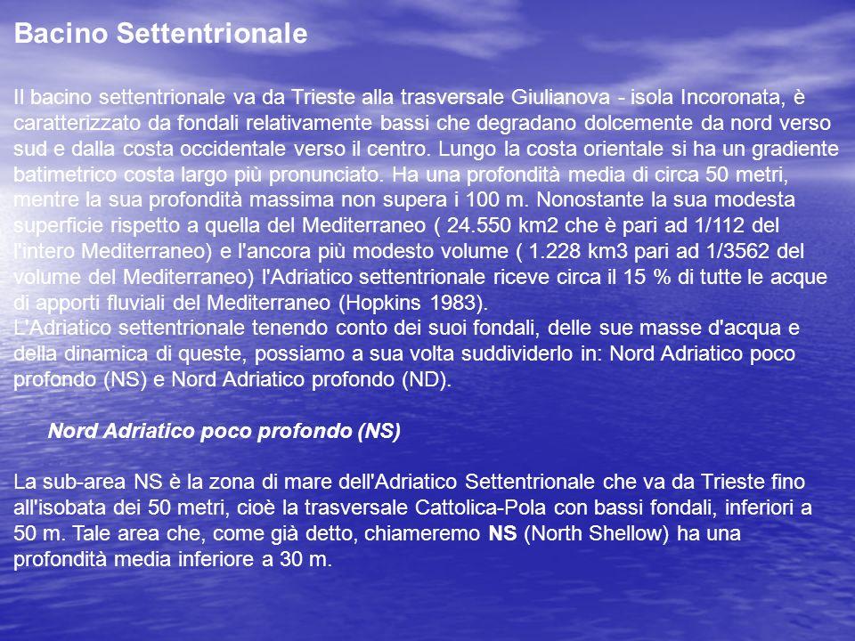 Bacino Settentrionale Il bacino settentrionale va da Trieste alla trasversale Giulianova - isola Incoronata, è caratterizzato da fondali relativamente