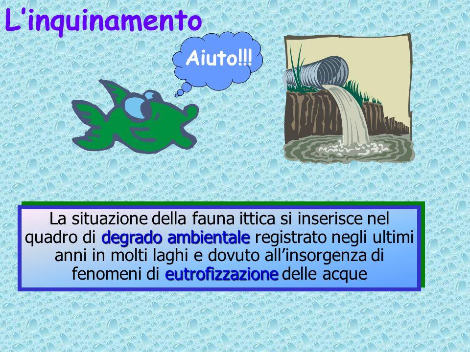 Linquinamento Aiuto!!! degrado ambientale eutrofizzazione La situazione della fauna ittica si inserisce nel quadro di degrado ambientale registrato ne