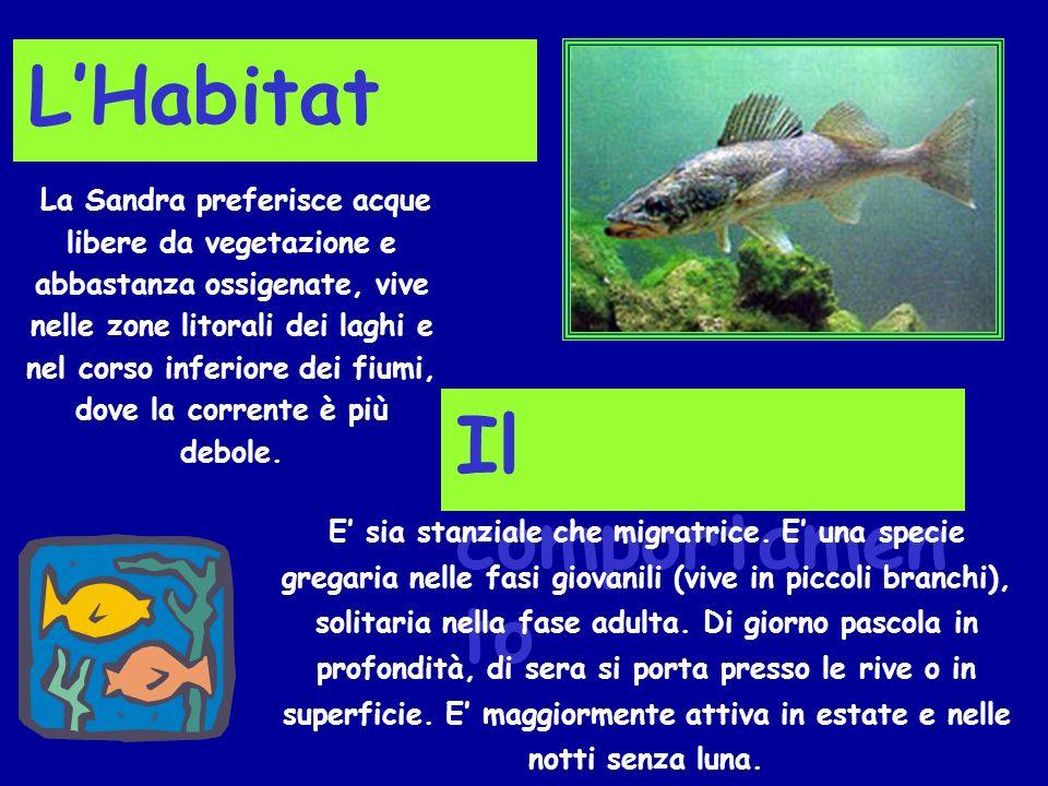 Lalimentazione A seconda delletà passa da unalimentazione a base di zooplancton e larve di insetti acquatici ad una dieta in cui prevale il pesce.
