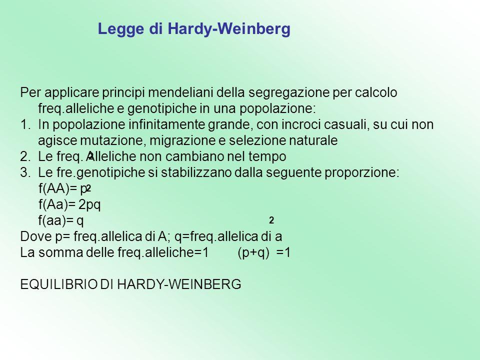 Legge di Hardy-Weinberg Per applicare principi mendeliani della segregazione per calcolo freq.alleliche e genotipiche in una popolazione: 1.In popolaz