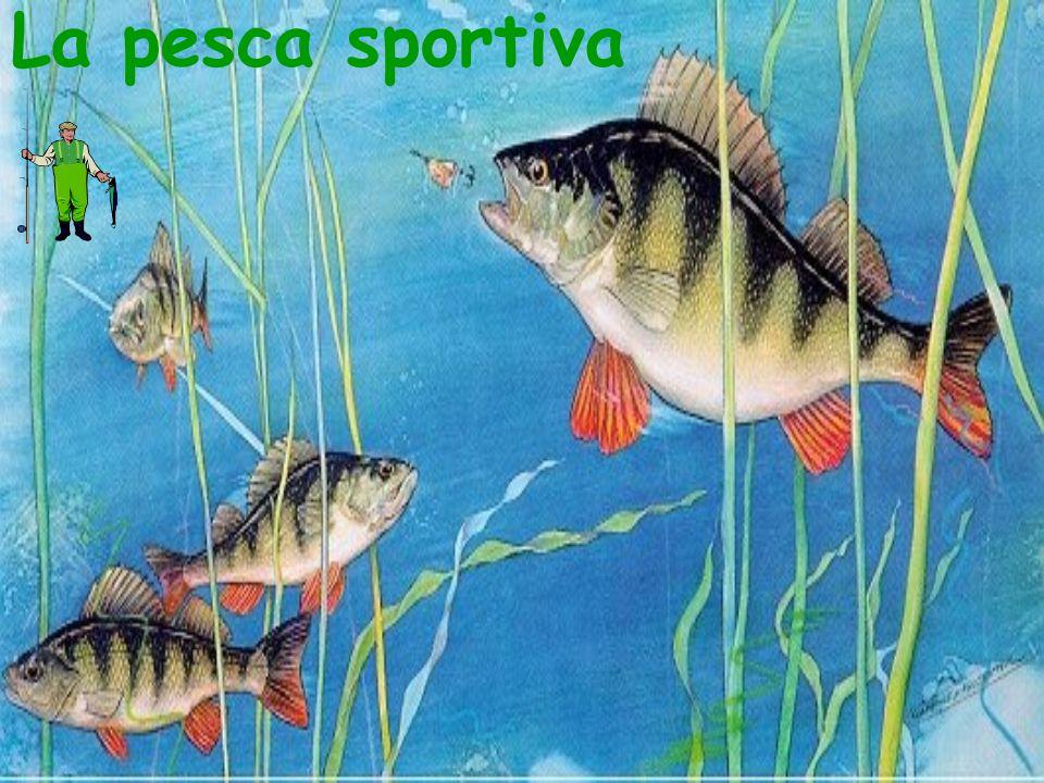La pesca sportiva