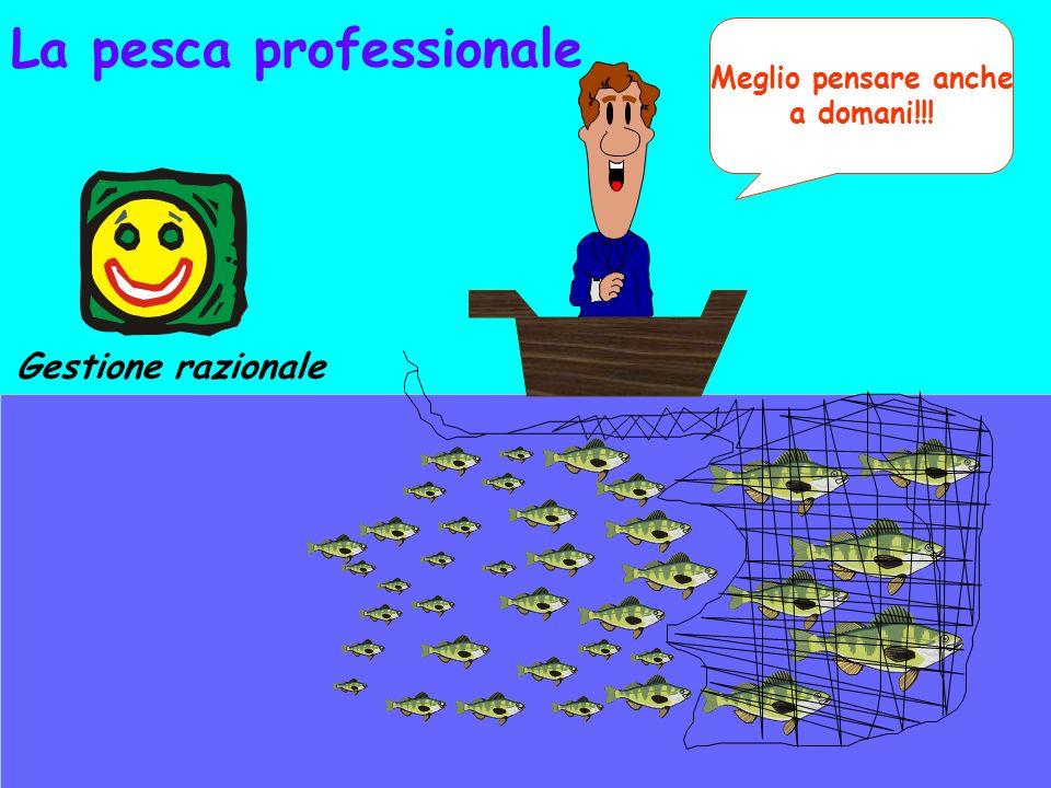 Meglio pensare anche a domani!!! Gestione razionale La pesca professionale