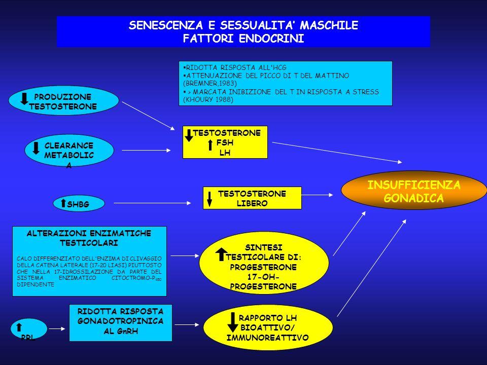 PRODUZIONE TESTOSTERONE CLEARANCE METABOLIC A TESTOSTERONE LIBERO ALTERAZIONI ENZIMATICHE TESTICOLARI CALO DIFFERENZIATO DELL ENZIMA DI CLIVAGGIO DELLA CATENA LATERALE (17-20 LIASI) PIUTTOSTO CHE NELLA 17-IDROSSILAZIONE DA PARTE DEL SISTEMA ENZIMATICO CITOCTROMO-P 450 DIPENDENTE SINTESI TESTICOLARE DI: PROGESTERONE 17-OH- PROGESTERONE RIDOTTA RISPOSTA ALL HCG ATTENUAZIONE DEL PICCO DI T DEL MATTINO (BREMNER,1983) > MARCATA INIBIZIONE DEL T IN RISPOSTA A STRESS (KHOURY 1988) TESTOSTERONE FSH LH PRL RIDOTTA RISPOSTA GONADOTROPINICA AL GnRH RAPPORTO LH BIOATTIVO/ IMMUNOREATTIVO INSUFFICIENZA GONADICA SHBG SENESCENZA E SESSUALITA MASCHILE FATTORI ENDOCRINI