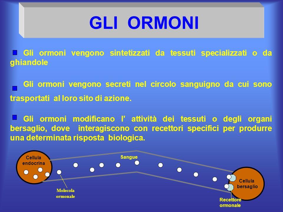 GLI ORMONI Gli ormoni vengono sintetizzati da tessuti specializzati o da ghiandole Gli ormoni vengono secreti nel circolo sanguigno da cui sono traspo