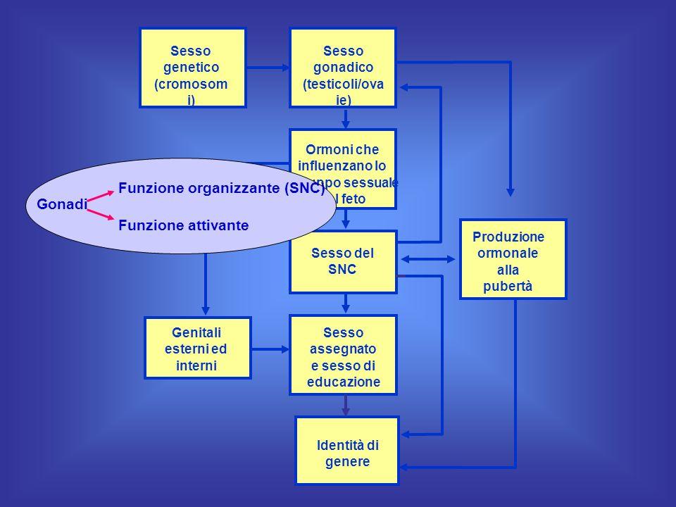 Sesso genetico (cromosom i) Sesso gonadico (testicoli/ova ie) Ormoni che influenzano lo sviluppo sessuale del feto Produzione ormonale alla pubertà Se
