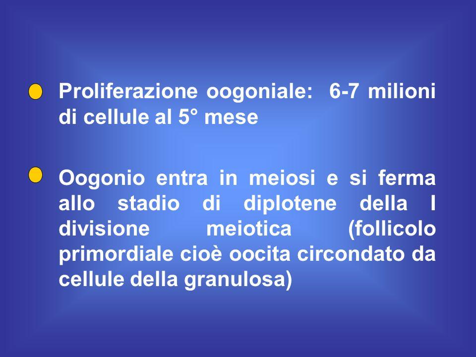 Proliferazione oogoniale: 6-7 milioni di cellule al 5° mese Oogonio entra in meiosi e si ferma allo stadio di diplotene della I divisione meiotica (fo