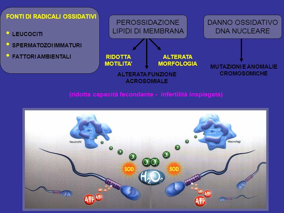 PEROSSIDAZIONE LIPIDI DI MEMBRANA DANNO OSSIDATIVO DNA NUCLEARE RIDOTTA MOTILITA ALTERATA MORFOLOGIA ALTERATA FUNZIONE ACROSOMIALE (ridotta capacità f