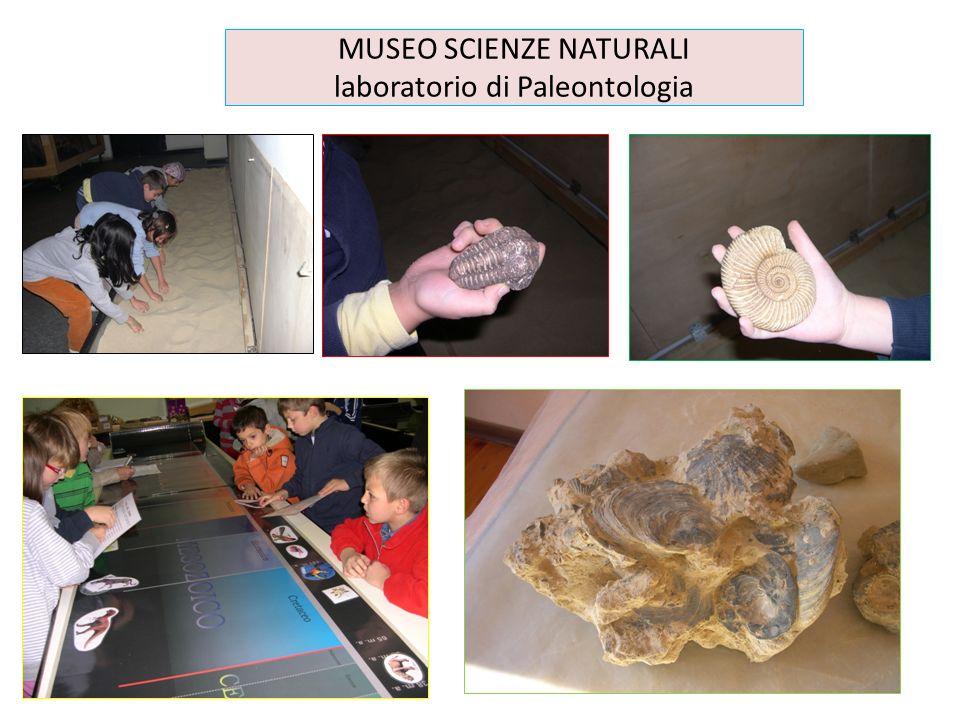 MUSEO SCIENZE NATURALI laboratorio di Paleontologia