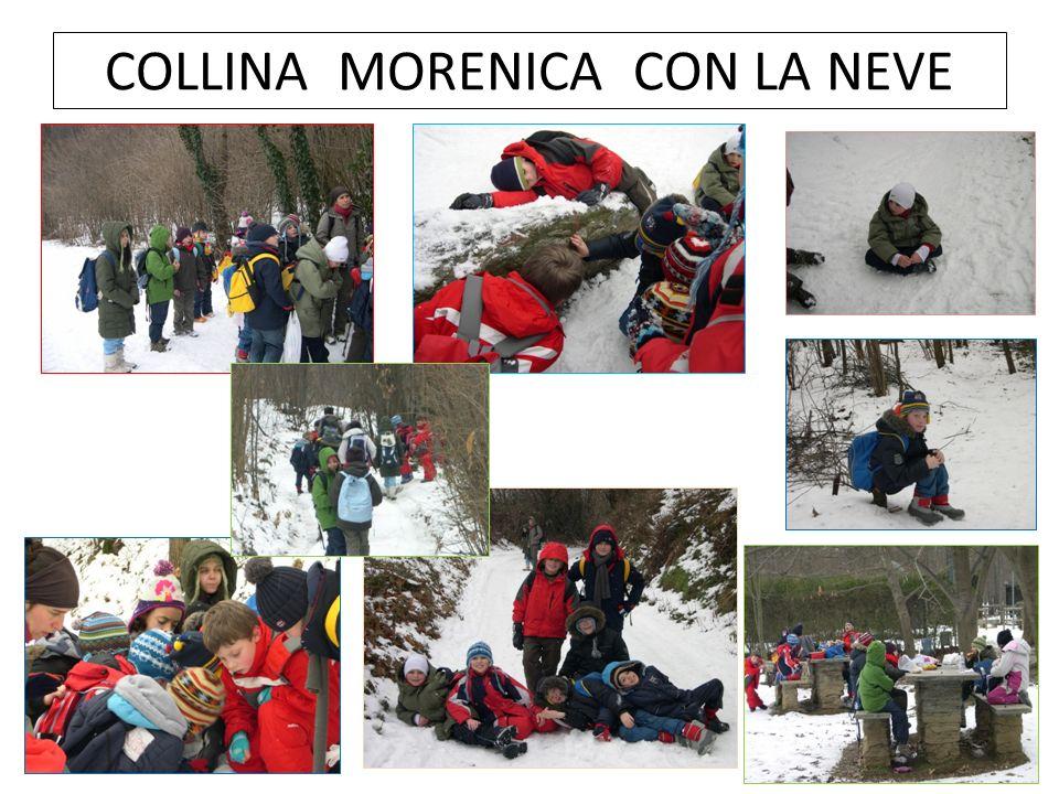COLLINA MORENICA CON LA NEVE