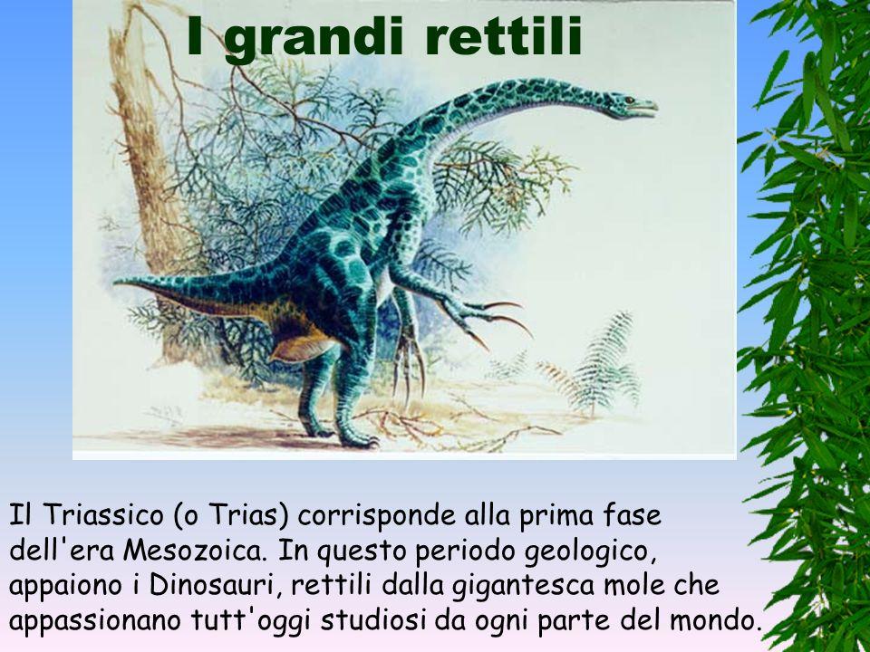 Sviluppo dei rettili Nel Permiano cresce l'importanza dei rettili, alcuni dei quali (come gli Arcosauri) sono antenati dei Dinosauri. I vertebrati han