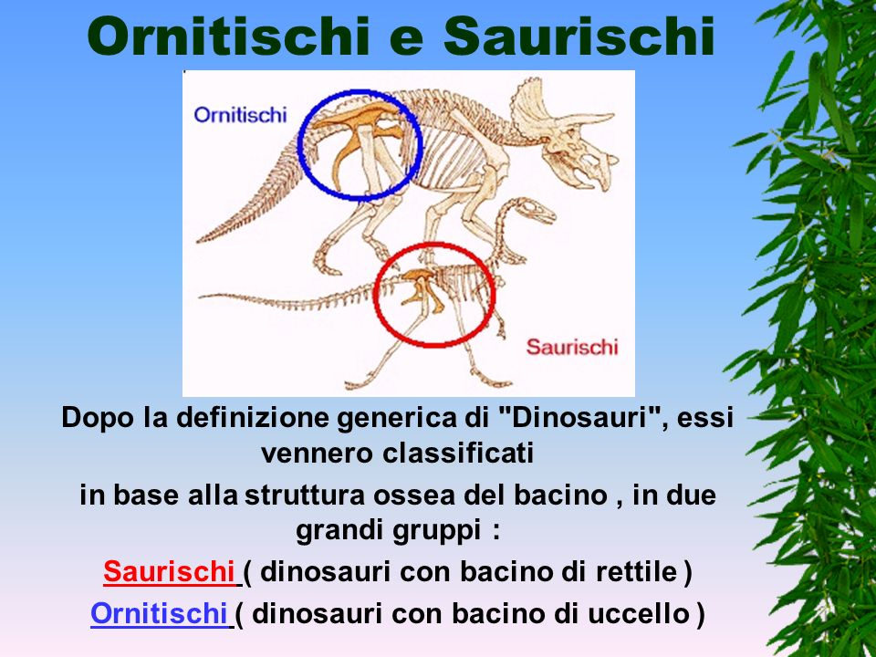 Chi erano i dinosauri? I Dinosauri erano rettili come le lucertole, dalle quali deriva il nome :