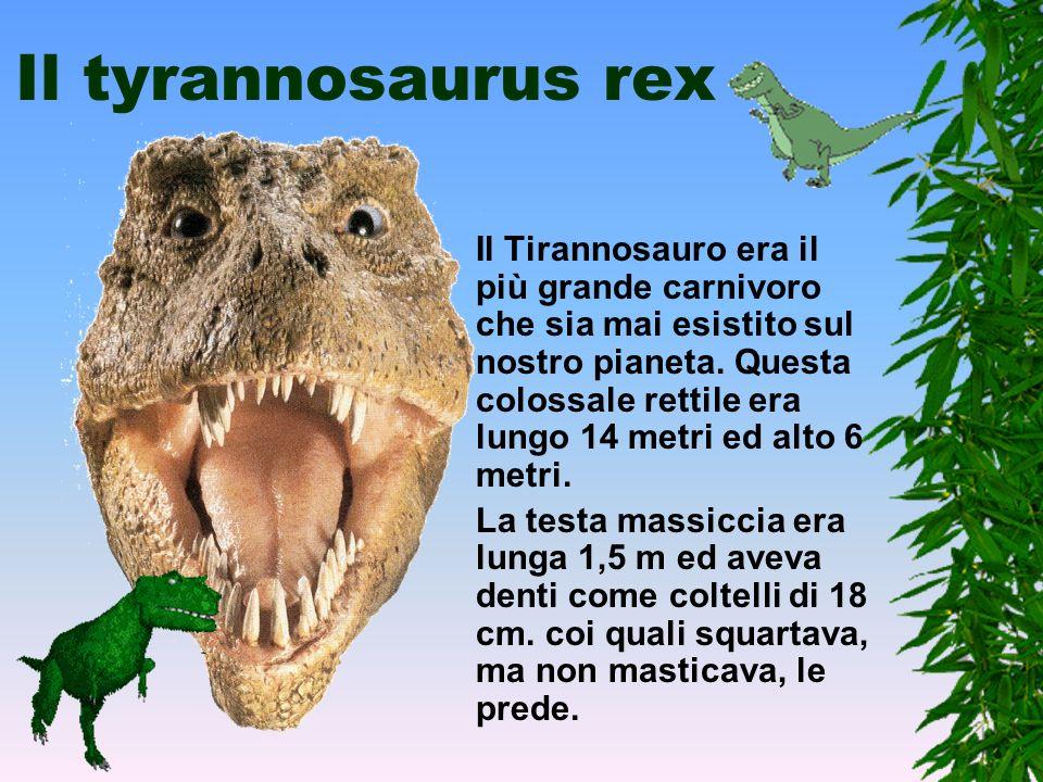 I dinosauri carnivori I Dinosauri Carnivori, tutti dell' ordine dei Saurischi, appartenevano al gruppo dei Teropodi, un termine che li definisce come