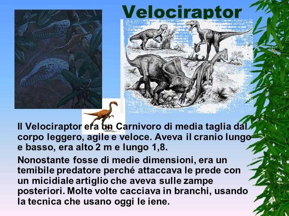 Il tyrannosaurus rex Il Tirannosauro era il più grande carnivoro che sia mai esistito sul nostro pianeta. Questa colossale rettile era lungo 14 metri