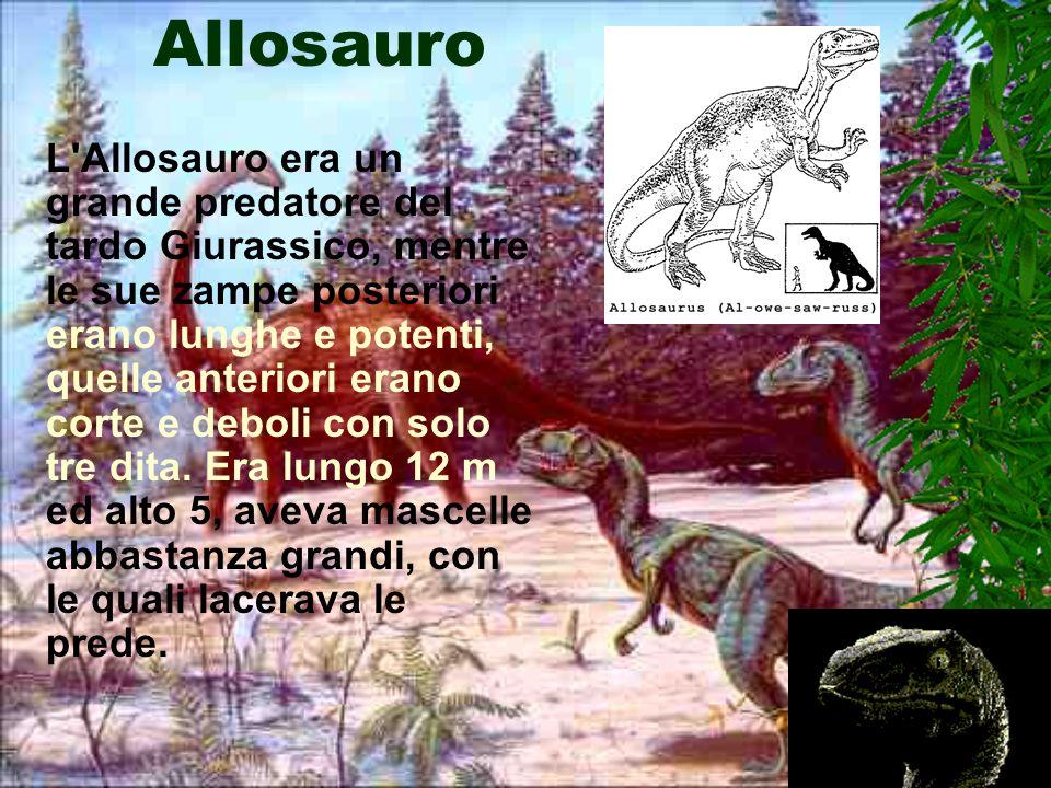 Velociraptor Il Velociraptor era un Carnivoro di media taglia dal corpo leggero, agile e veloce. Aveva il cranio lungo e basso, era alto 2 m e lungo 1