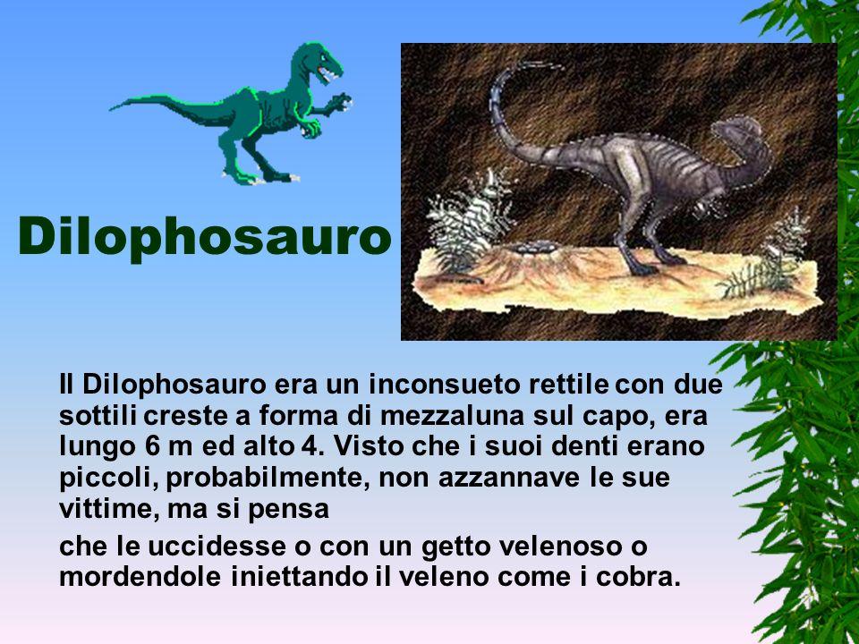 Allosauro L'Allosauro era un grande predatore del tardo Giurassico, mentre le sue zampe posteriori erano lunghe e potenti, quelle anteriori erano cort