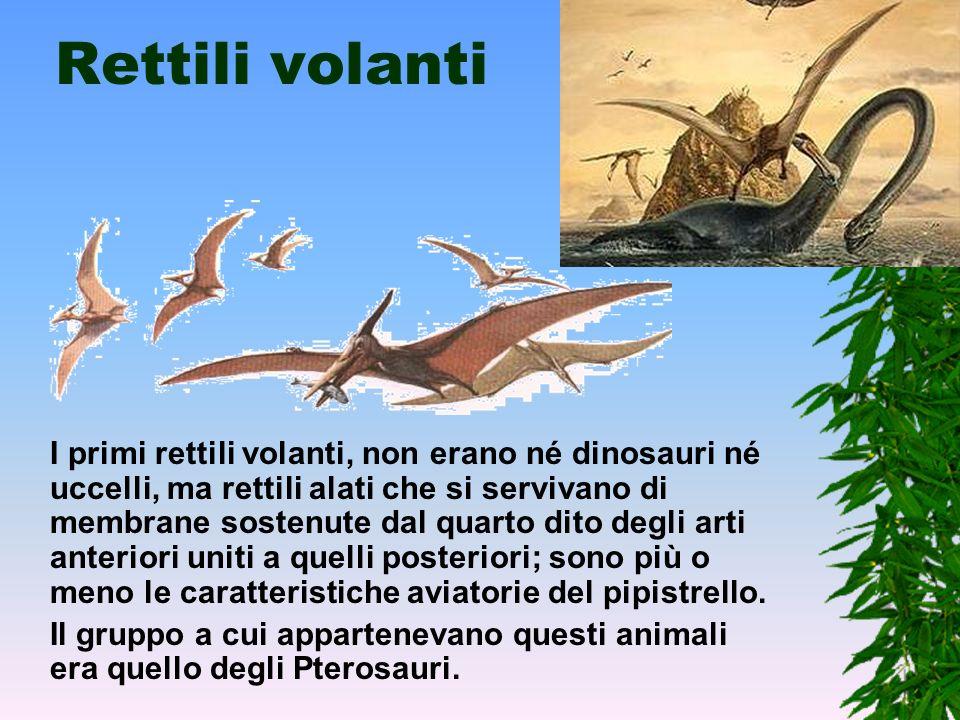 Anatosauro L'Anatosauro aveva il cranio basso, senza cresta e un muso allargato proprio come il muso di un' anatra. Era molto grande e lungo fino a 13
