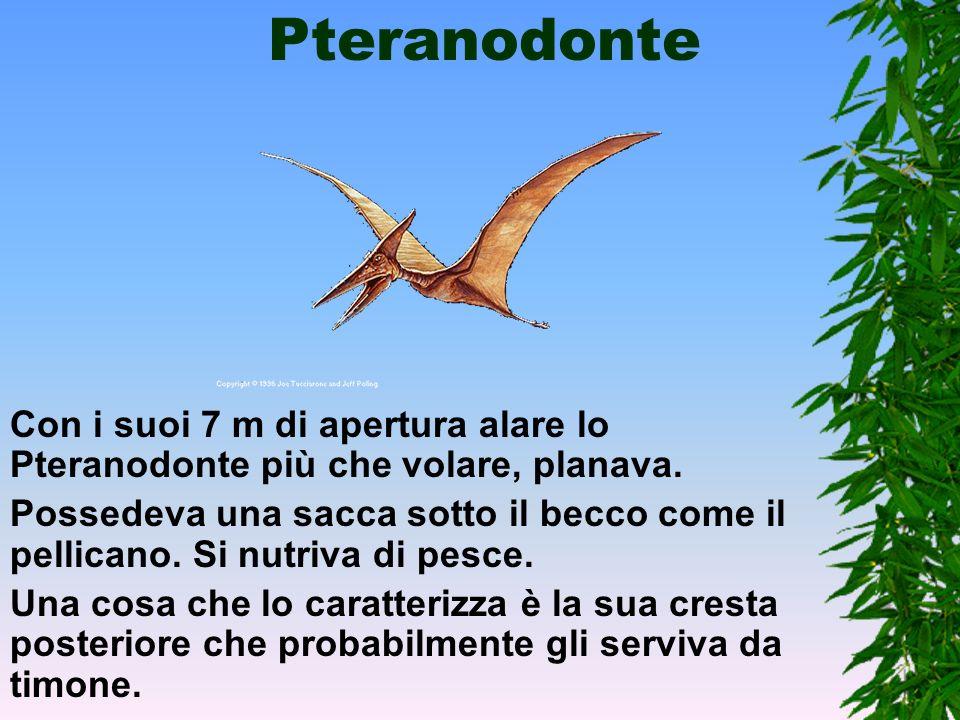 Rettili volanti I primi rettili volanti, non erano né dinosauri né uccelli, ma rettili alati che si servivano di membrane sostenute dal quarto dito de
