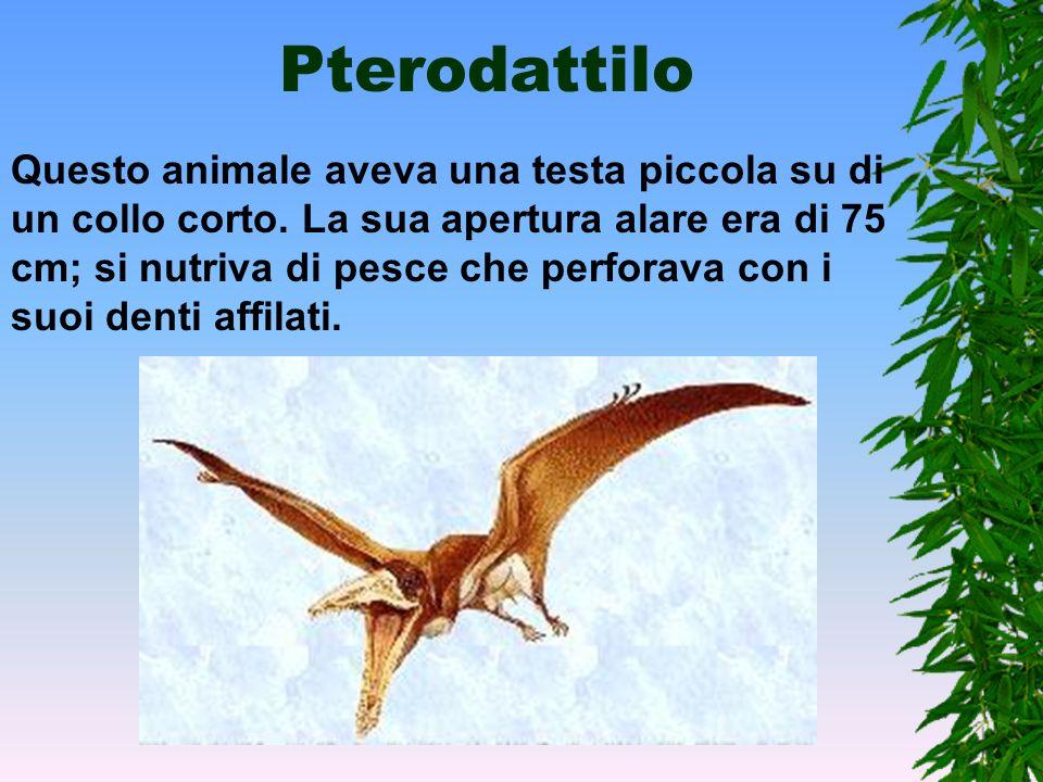 Pteranodonte Con i suoi 7 m di apertura alare lo Pteranodonte più che volare, planava. Possedeva una sacca sotto il becco come il pellicano. Si nutriv