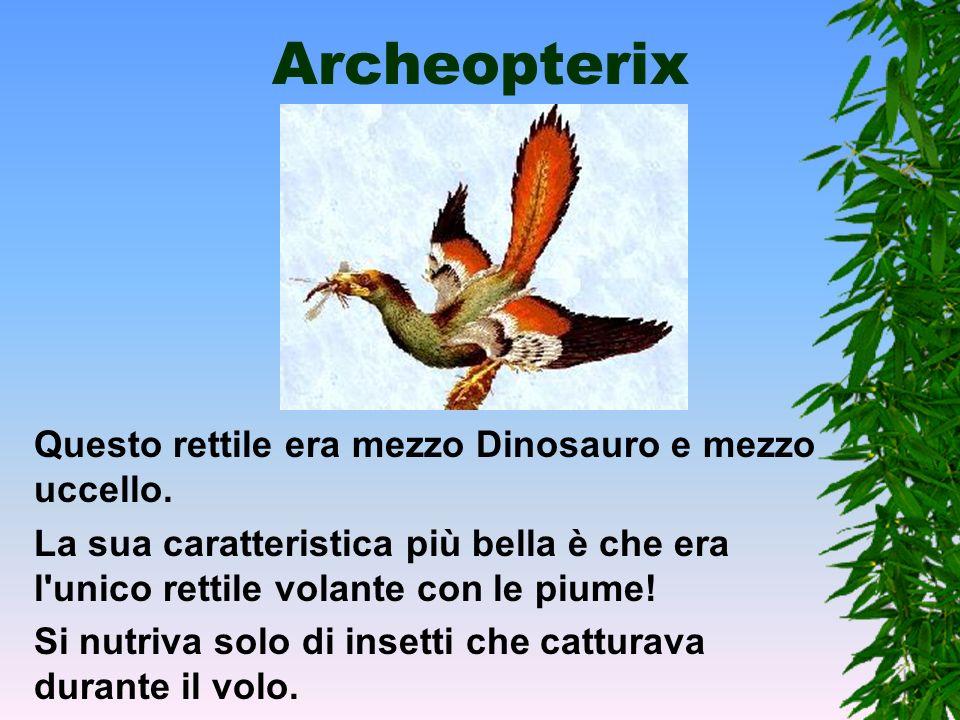 Dimorphodont Aveva il cranio stretto e molto grosso (20 cm su di un corpo di 80cm). Possedeva una coda che probabilmente gli serviva come timone.