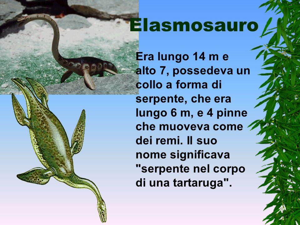 Rettili marini Alcuni gruppi di rettili invece di proseguire la loro evoluzione sulla terra ferma, come fecero alcuni Dinosauri, tornarono all'acqua e