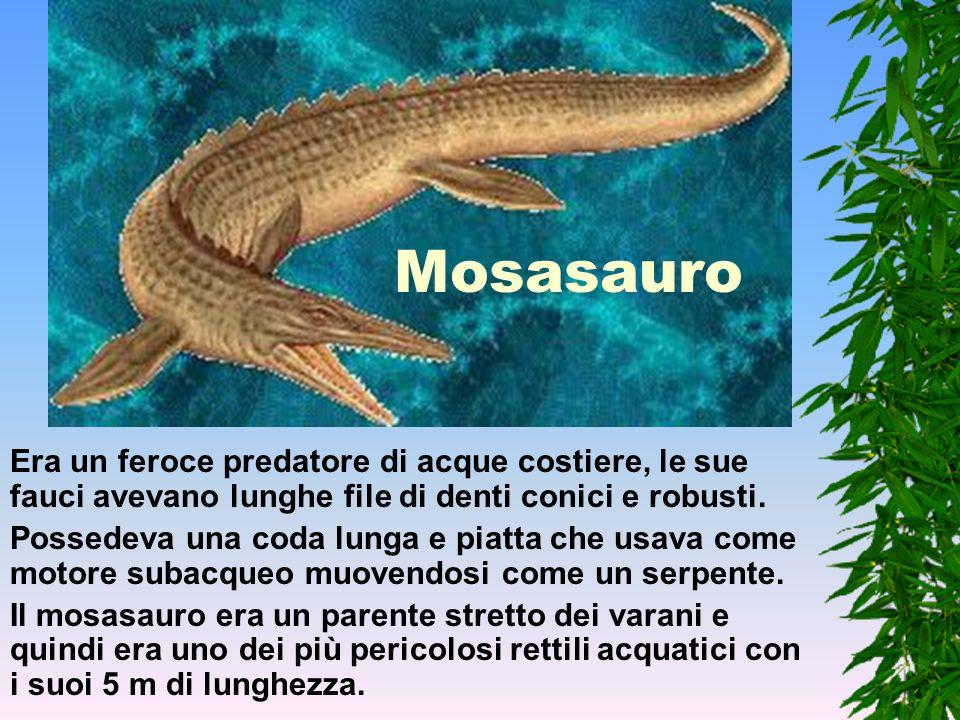 Plesiosauro Era lungo 2 m e con le pinne a forma di pagaia era un agile nuotatore. Possedeva un lungo collo che probabilmente usava per catturare i pe