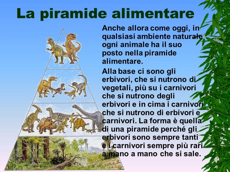 La rete alimentare I rapporti che legano tra loro gli animali sono molto complicati. Ogni ambiente ha la sua rete alimentare che per ogni animale indi