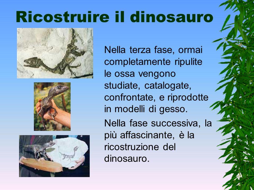 Liberare i fossili Dopo che si sono portate alla luce, le ossa vengono indurite con fissativi per evitare che non si danneggino durante l'estrazione d