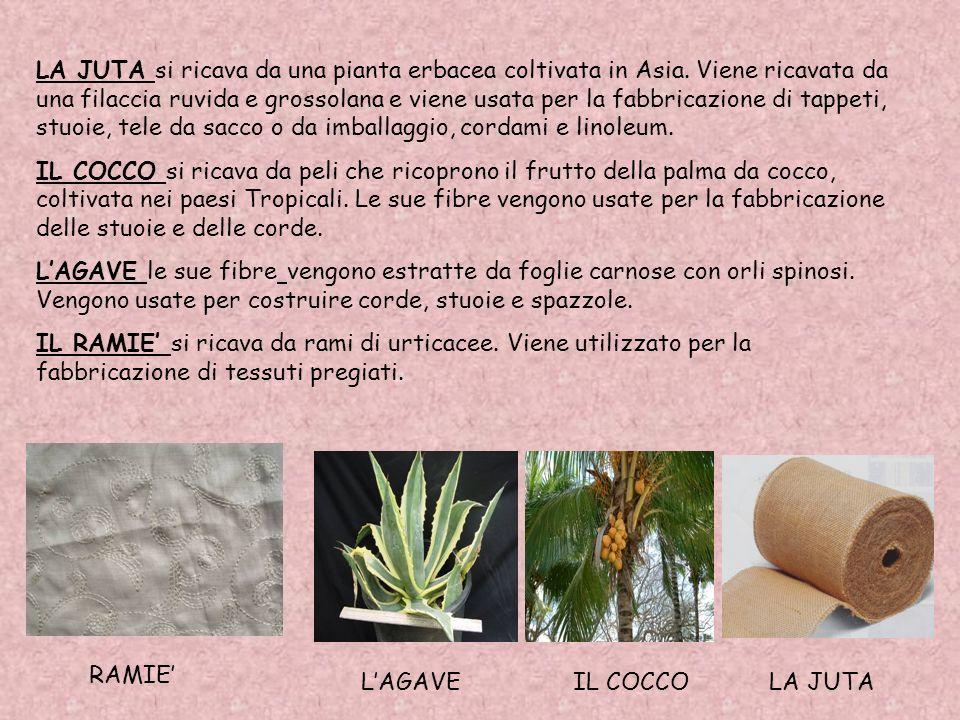 Le fibre tessili si dividono in vegetali come: La Juta, Il Cocco, LAgave, Il R a m i è, Il Cotone, Il Lino, La Canapa. E animali come: La Lana, come i
