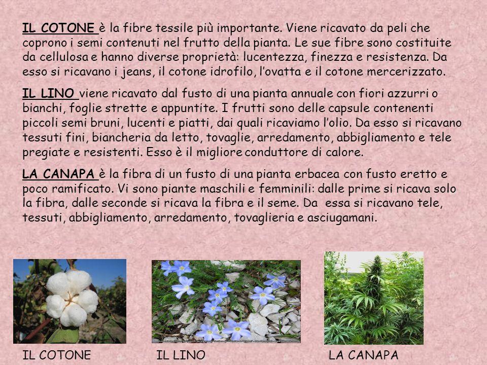 LA JUTA si ricava da una pianta erbacea coltivata in Asia. Viene ricavata da una filaccia ruvida e grossolana e viene usata per la fabbricazione di ta