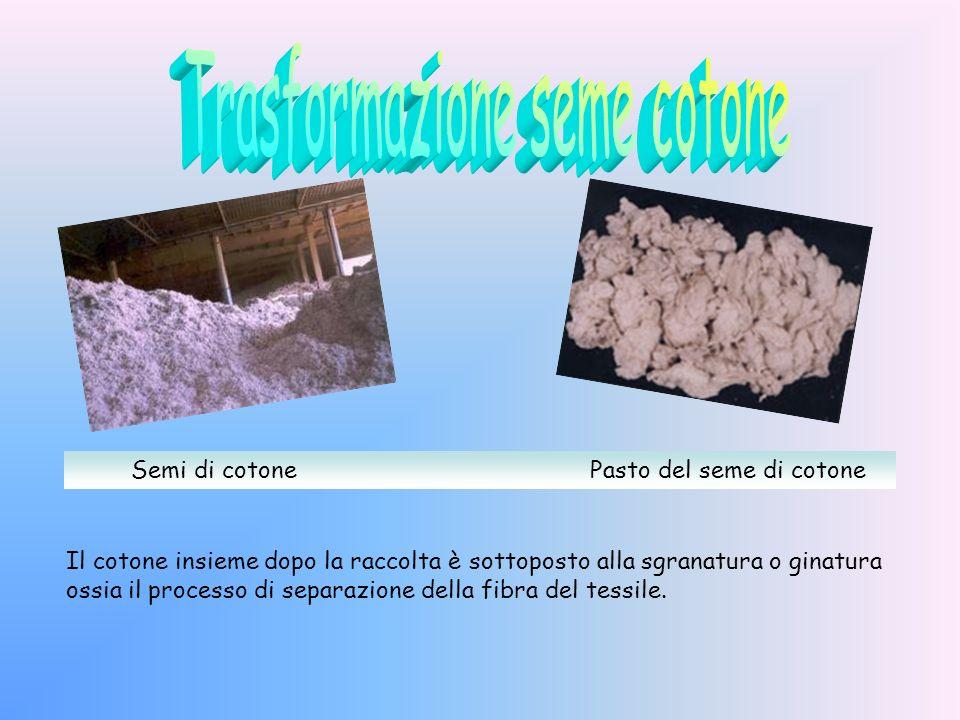 Meccanica: viene fatta nei paesi nei quali si ha un grande sviluppo della coltura del cotone. Manuale: è il metodo migliore, anche se il più faticoso,