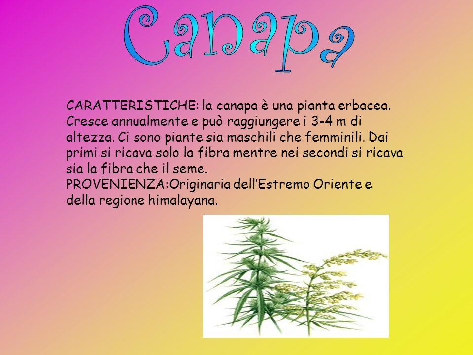 CARATTERISTICHE:Il lino è una pianta che cresce annualmente e che può raggiungere un metro di altezza. Ha il fiore azzurro o bianco e ha le foglie str