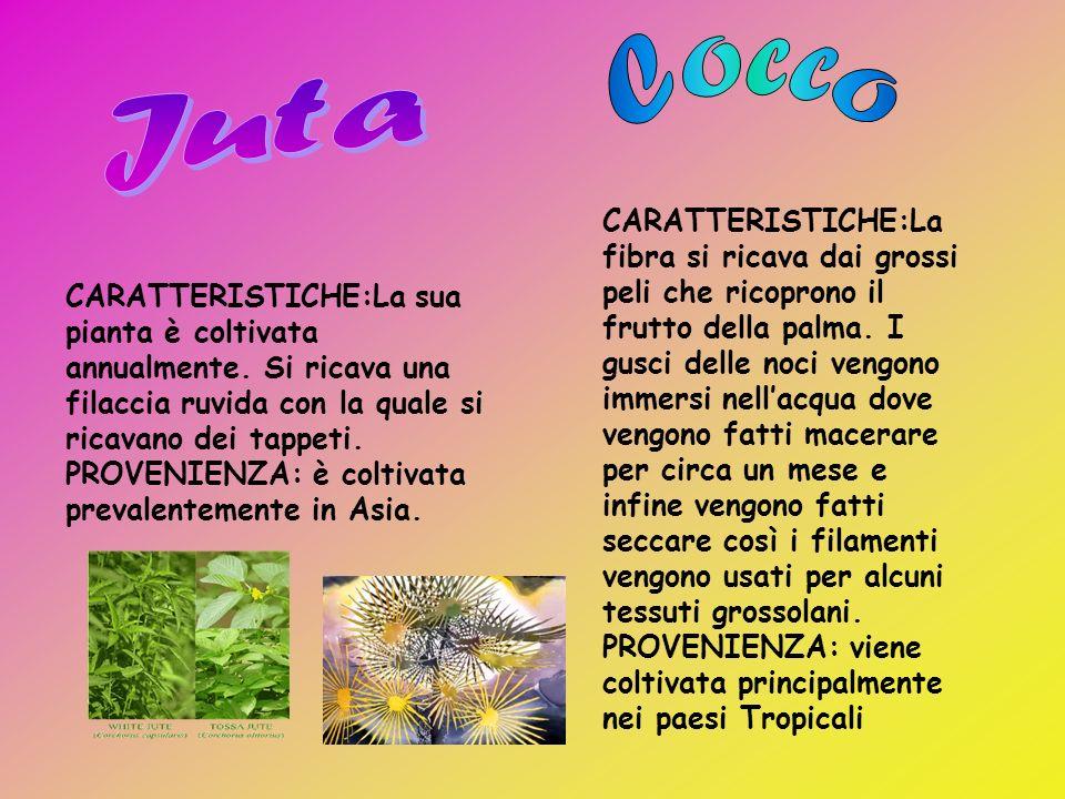 CARATTERISTICHE: la canapa è una pianta erbacea. Cresce annualmente e può raggiungere i 3-4 m di altezza. Ci sono piante sia maschili che femminili. D