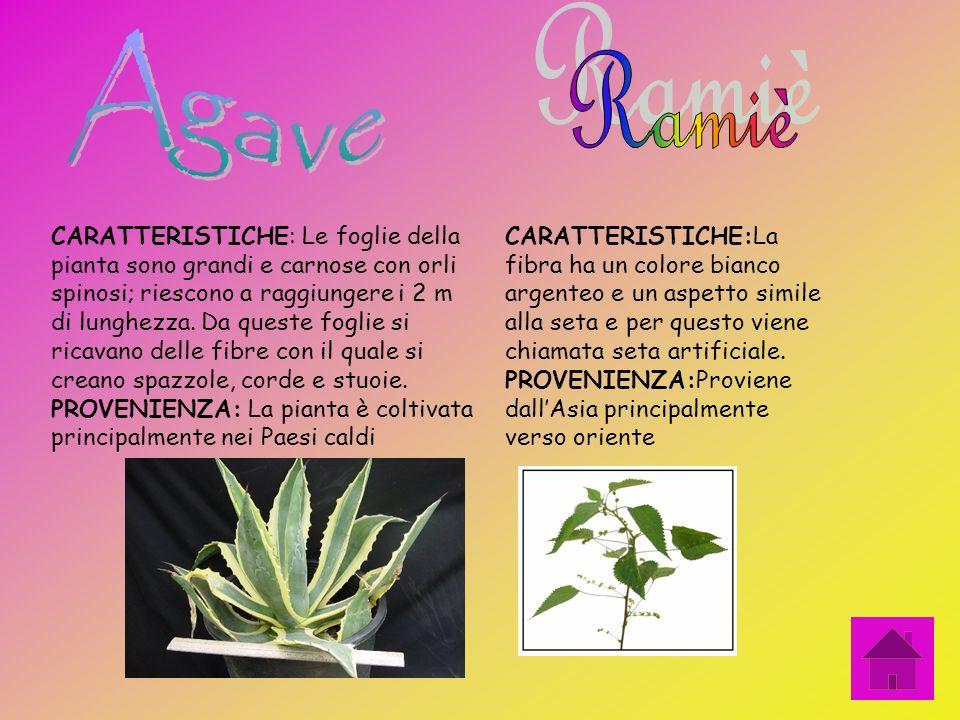 CARATTERISTICHE:La sua pianta è coltivata annualmente. Si ricava una filaccia ruvida con la quale si ricavano dei tappeti. PROVENIENZA: è coltivata pr