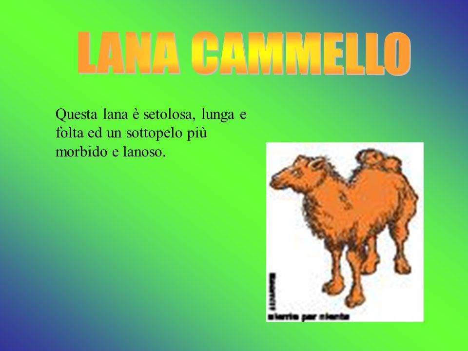 Ha caratteristiche simili alla lana, i tessuti più fini sono fatti con la lana dei capretti.