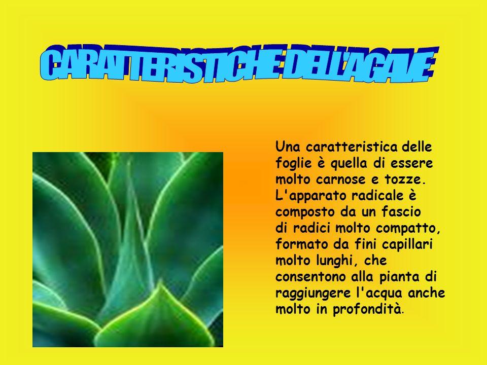 La fibra di cocco, grazie alla sua costituzione, racchiude in sé un'elevata quantità d'aria La fibra di cocco è pratica perche' viene lavorata in modo