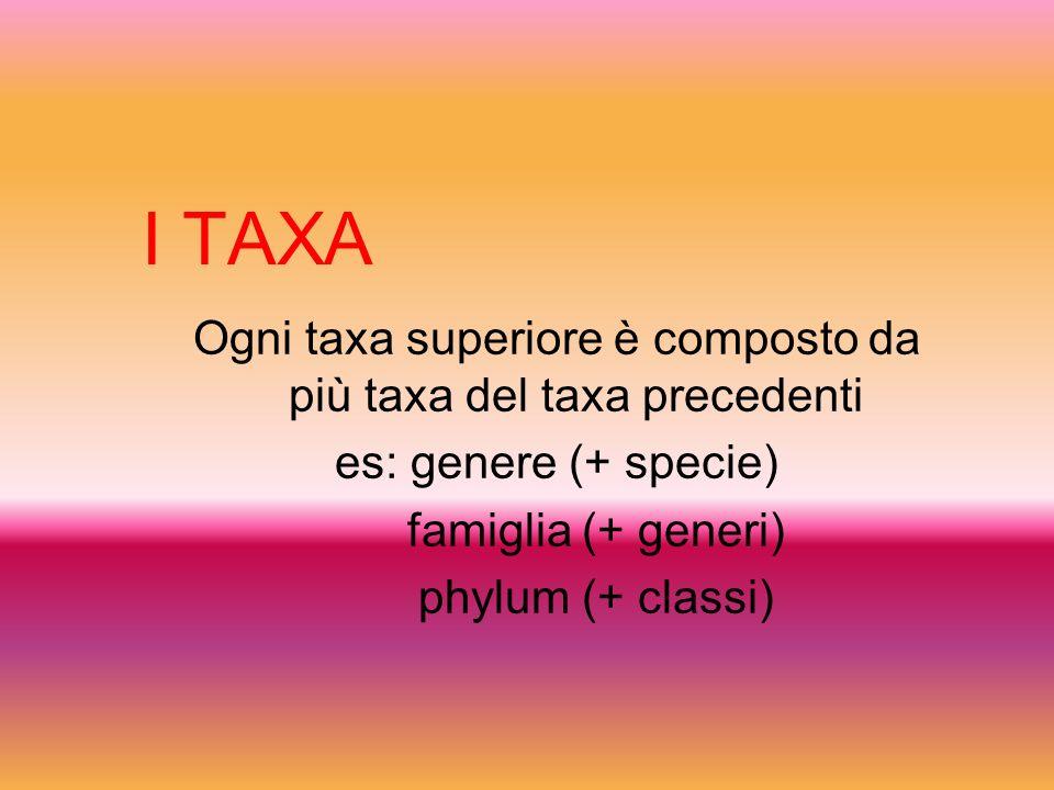 I TAXA Ogni taxa superiore è composto da più taxa del taxa precedenti es: genere (+ specie) famiglia (+ generi) phylum (+ classi)